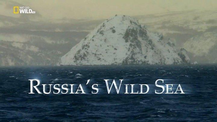 Дикое море России - Выживают сильнейшие