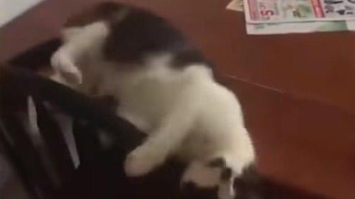 Приколы с котами и смешная ОЗВУЧКА! Супер уморительно!!!
