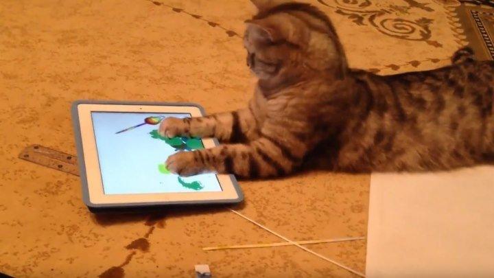 Продвинутый кот и планшет!