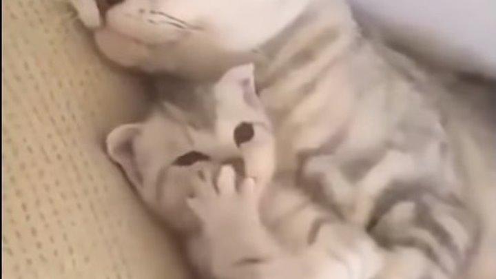 Кошки и милые котятки!) Мимишное видео!)