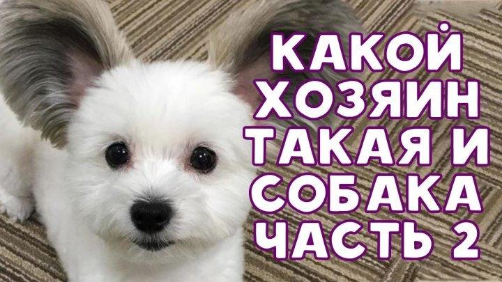 Какой хозяин, такая и собака (Часть 2)