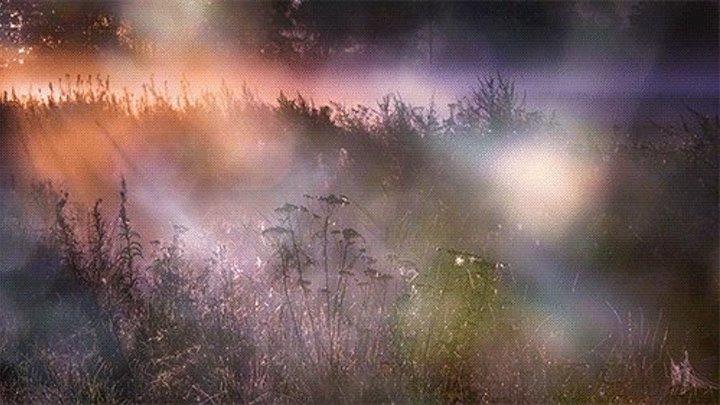 Открытка, гифы туман