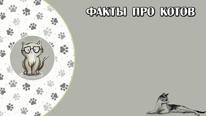 ФАКТЫ ПРО КОТОВ