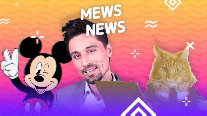 Mews News: День мяутери