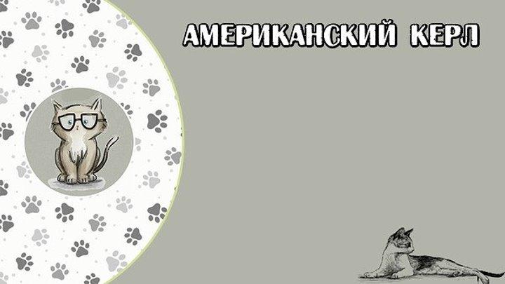 АМЕРИКАНСКИЙ КЕРЛ