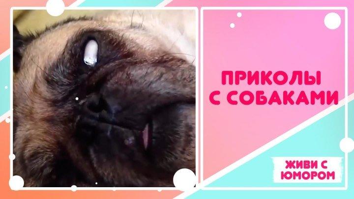 Приколы с собакенами