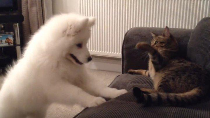 Пёс и кот - зарождение дружбы