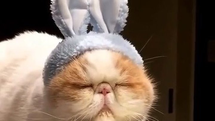 Так вот ты какой, САМЫЙ ленивый кот...))