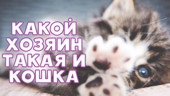 Какой хозяин, такая и кошка