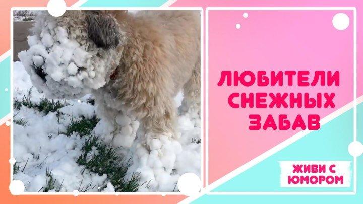 Любители снежных развлечений