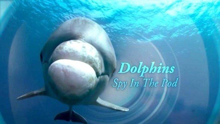 BBC. Дельфины скрытой камерой (2 серия из 2) / 2014 /
