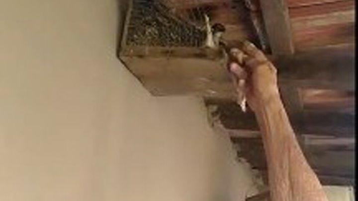Вот это доверие! Пожилой мужчина кормит птичку.