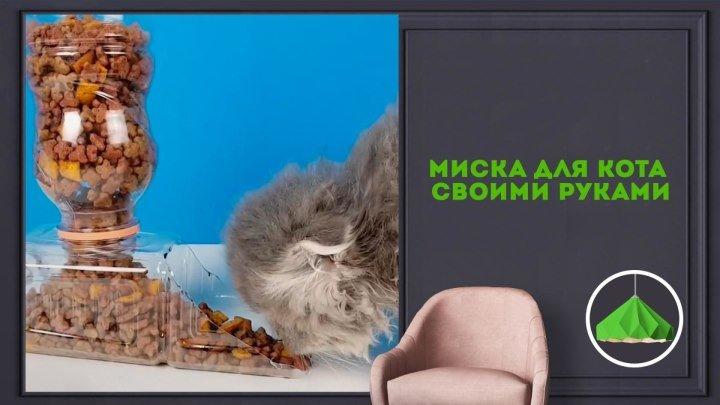 Миска для котика