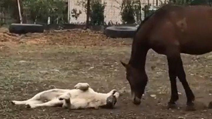 Вот это дружба! Лошадь играет с собакой.