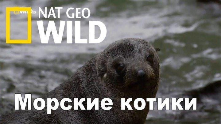 Морские котики. Битва за выживание. Документальный фильм 1080 Nat Geo Wild