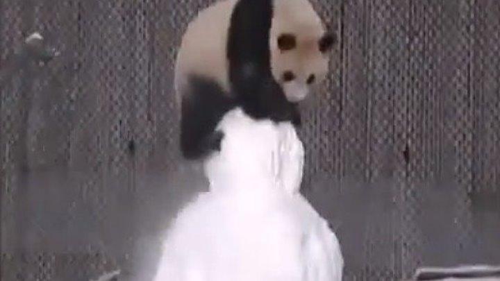 Милая Панда атакует снеговика..))