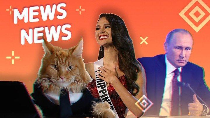 Mews News. Пресс-котференция
