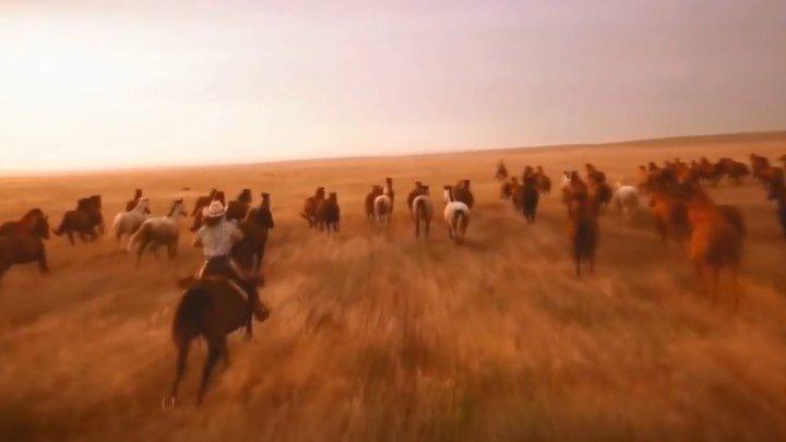 Лошади - величественная красота, грация и мощь...