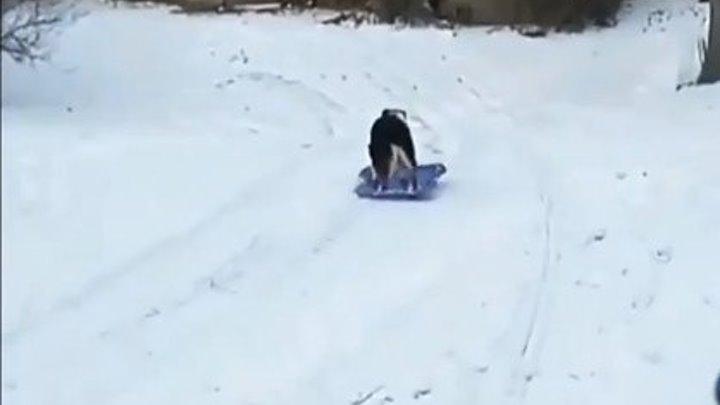 Какая умничка. Собака катается со снежной горки..