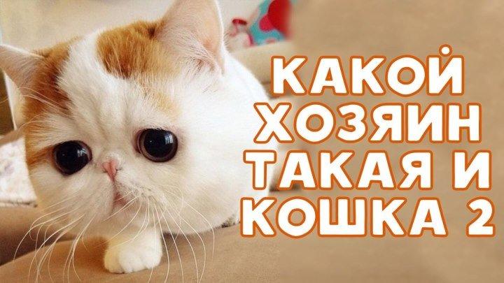 Какая кошка, такой и хозяин