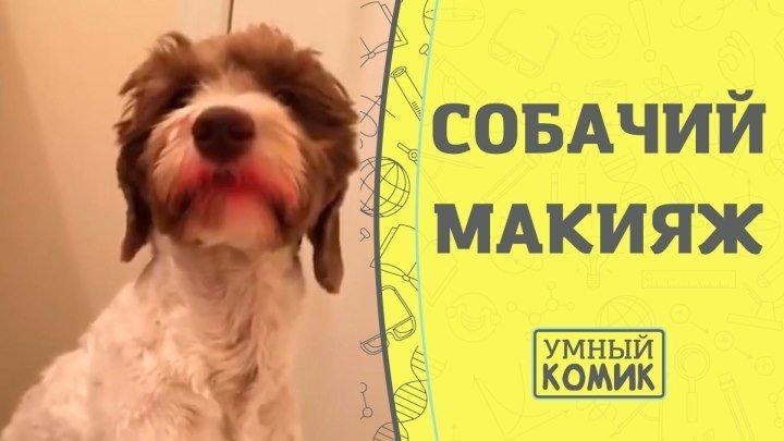Собачий макияж