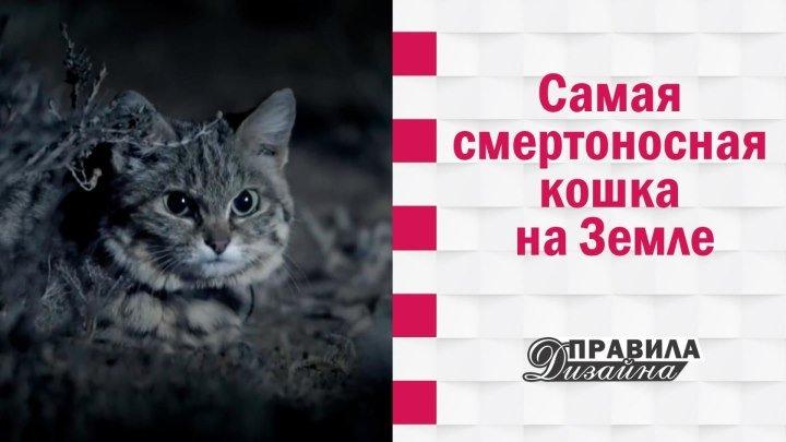 Самая смертоносная кошка на Земле