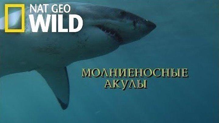 Nat Geo Wild. Молниеносные акулы. Потрясающий документальный фильм 1080 HD