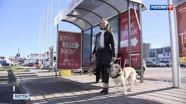 В Краснодаре не пустили в автобус девушку с собакой-поводырем