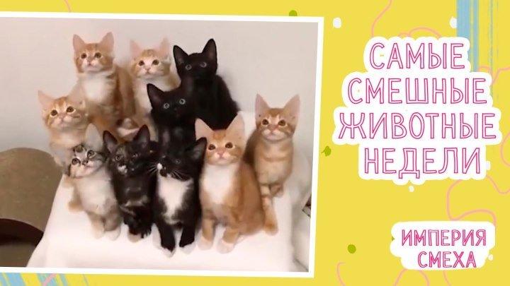 Смешные видео с животными за неделю