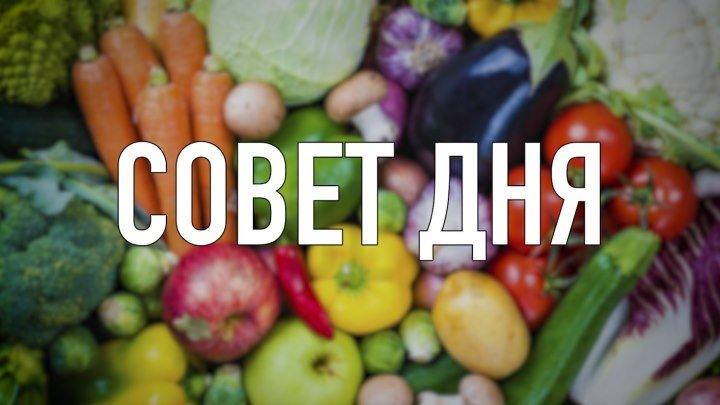 Совет дня | Овощи