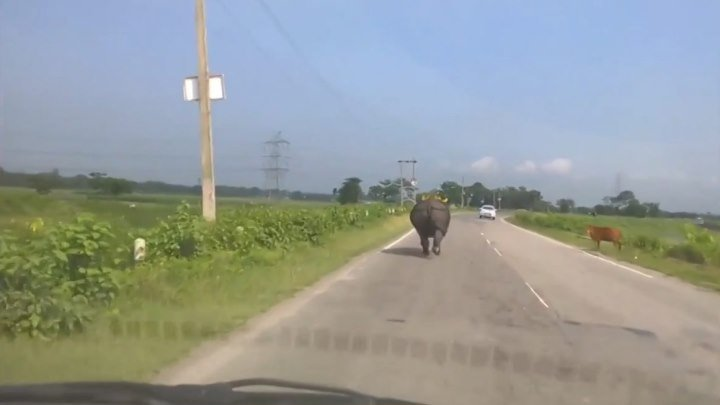 Тем временем на дорогах Индии..