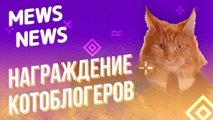 Mews News. Награждаем котоблогеров