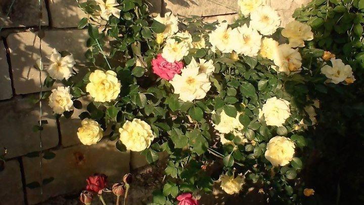Растения от Александра и Татьяны с.Скалистое