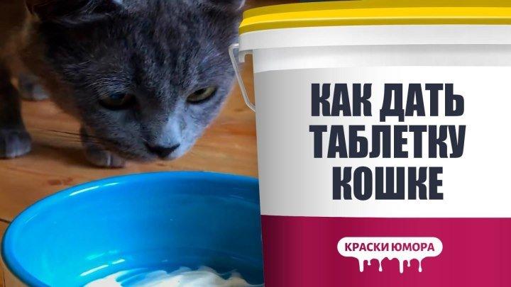 Если вашей кошке нужна таблетка