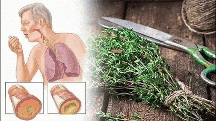 Растения, которые очистят легкие от слизи и паразитов