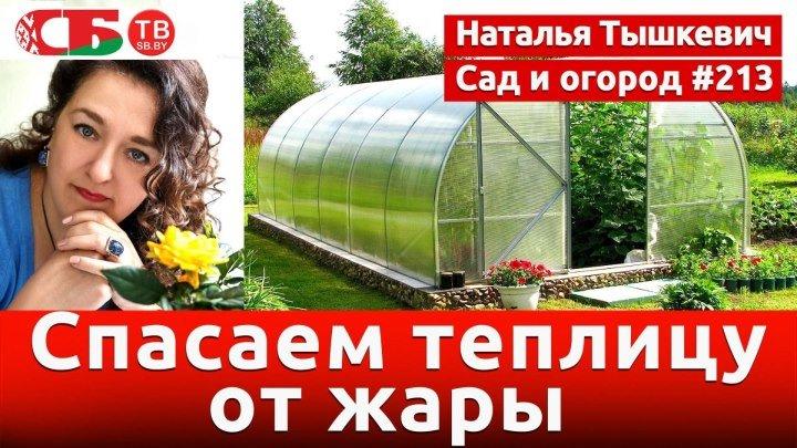 Как защитить от жары растения в теплице