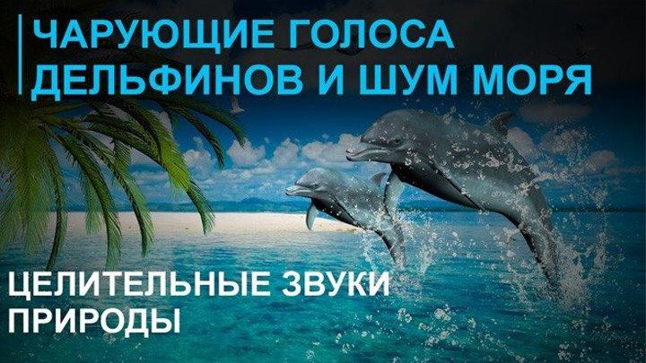 Звуки моря - шум волн ☯ Голоса дельфинов ☯