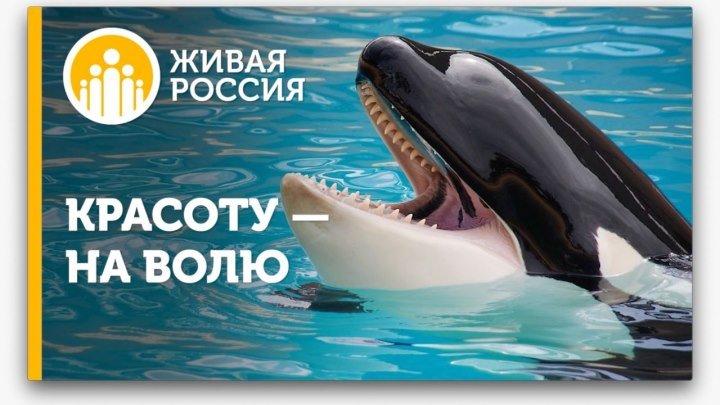 Живая Россия - Красоту - на волю