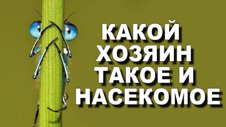 Какой хозяин, такое и насекомое
