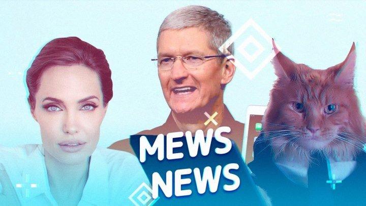 Mews News. Кот-путешественник, Анджелина Джоли и новый iPad