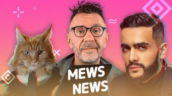 Mews News | Кот-депутат, Шнуров и Гасан Гусейнов
