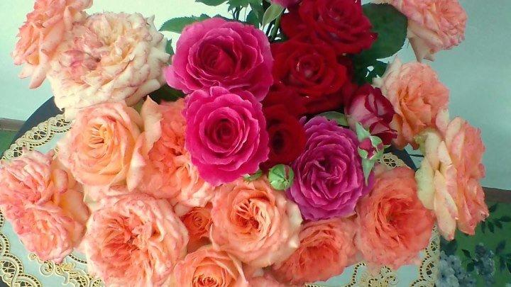 Презентация моих роз с.Скалистое - Александр и Татьяна $