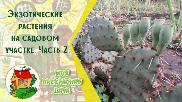Экзотические растения на садовом участке. Часть 2