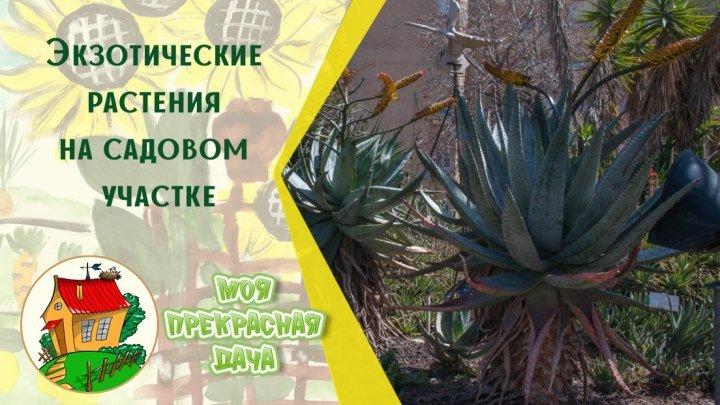 Экзотические растения на садовом участке
