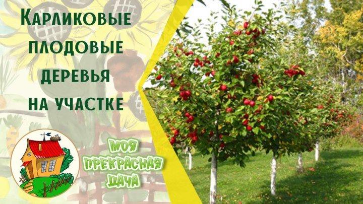 Карликовые плодовые деревья на садовом участке