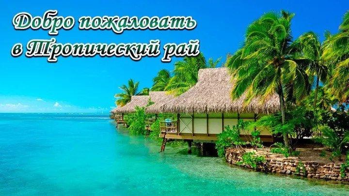 Добро пожаловать в Тропический рай.. пальмы, океан, пляж, солнце
