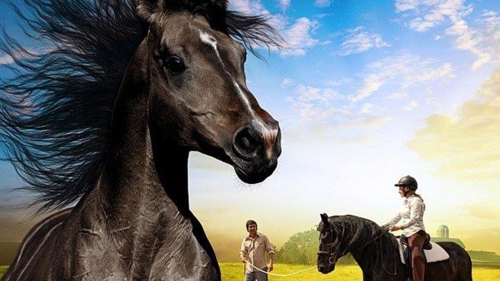 Небесный конь /A Horse from Heaven, 2018. семейный