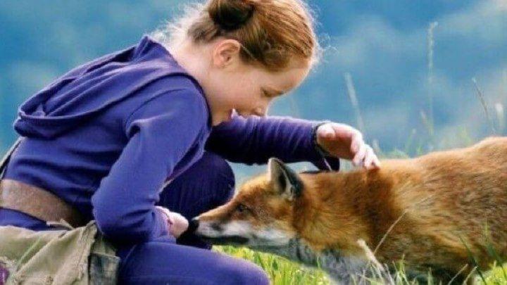 Девочка и лисенок (2007)Драма, Приключения, Семейный