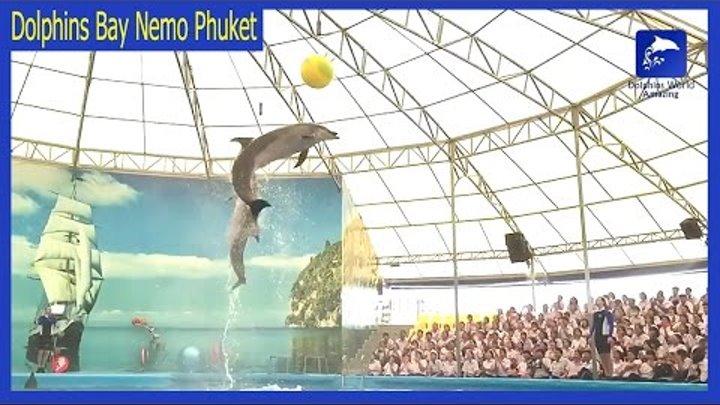 Dolphins Bay Nemo Phuket trailer