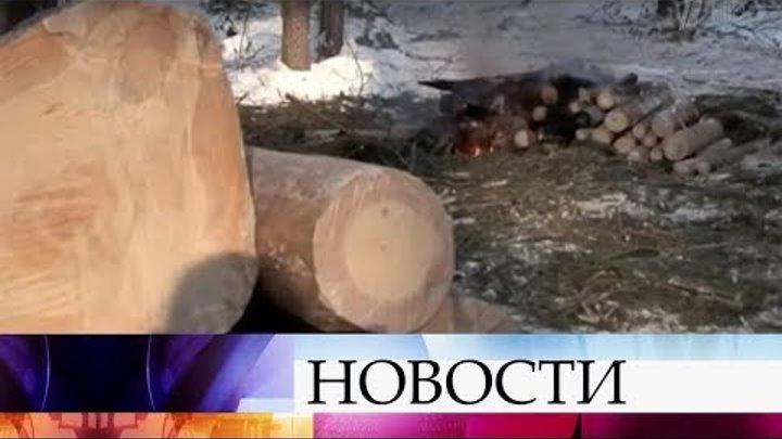 В Омской области по делу о незаконной вырубке леса задержаны участники группировки.